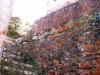 26-musgo-naranja-tipico-de-zonas-libre-de-contaminacion-ambiental