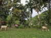 Life in the Cuban mountains
