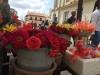 flores-camaguey