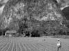 Pinar Del Rio Farmer.  Photo by Michael Roy