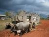 Farming in Viñales. Photo by Matthew Siffert
