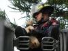 bomberos-rescatan-gato