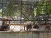 zoo-26-11