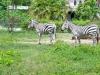 zoo-26-4