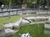 zoo-26-6