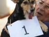 11-Winner of the prettiest dog contest.