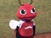 5-la-avispa-mascota-del-equipo-santiago