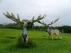 30-animales-del-mesolitico