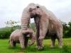 34-animales-del-mesolitico