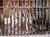 34-hiena-rayada
