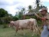 Animal breeder.