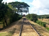 4-To support the sugar trade, a railway line was established connecting the inland valley with Trinidad and neighbouring ports.