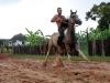 Horse Race, Viñales, Cuba