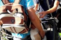 Esta-perrita-iba-a-ser-entregada-a-Zoonosis-y-también-fue-rescatada