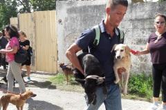 Más-de-10-perros-lograron-salvarse