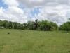 vista-del-terreno-intervenido-con-la-siembra-al-centro-la-ceiba