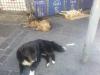 Los-perros-callejeros-de-Valparaíso-gordos-y-felices