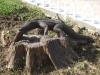 A Wooden Zoo on a street in Bayamo, Cuba