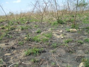 The humid forests that surrounded us are now dried scrubland, recurrently laid to waste by fire.