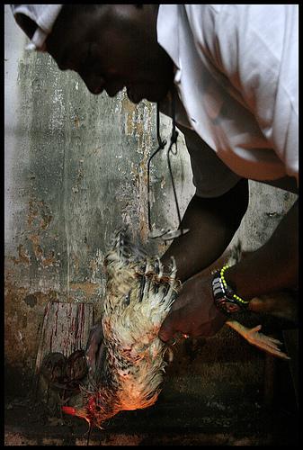 Cuban babalawo, Photo: priscilla.mora