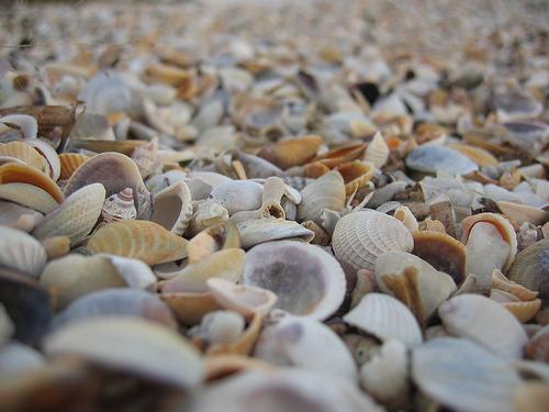 Shells by the beach of Isla de la Juventud, Cuba, photo:Sami Keinänen's