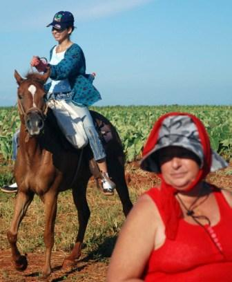 To substantially increase Cuba's agricultural production requires much effort under adverse conditions.  Photo: Caridad