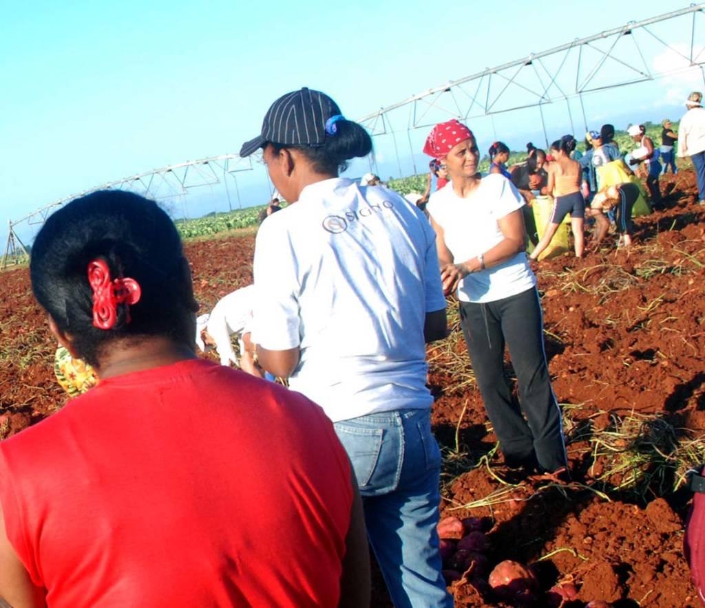 """Voluntary"" field work.  Photo: Caridad"
