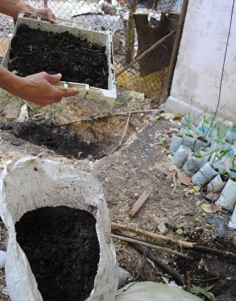 Compost ready for using.