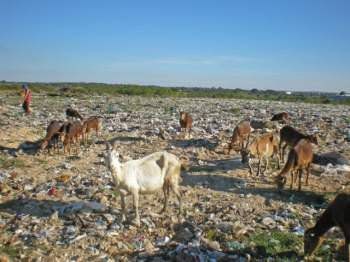 The animals that pasture there are potential spreaders of illnesses and toxic substances.