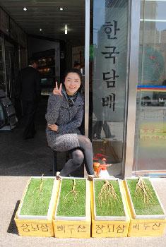 Korean Gingseng