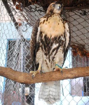 In Havana endangered species are captured and sold.