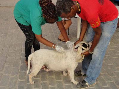 Anti-parasite campaign in Old Havana.