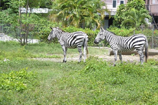 At Havana's 26th Ave. Zoo