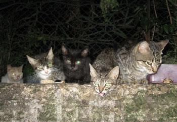 mis-gatos