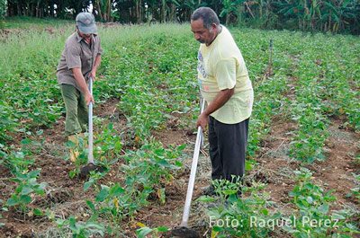 The Cuban State is handing out cultivable lands to farmers free of charge.