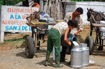 The Cuban press reported that Cuba was producing 1 million liters of milk a day.