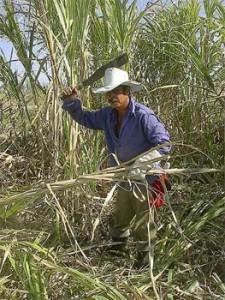 Sugarcane cutter.  Photo: Raquel Pérez.