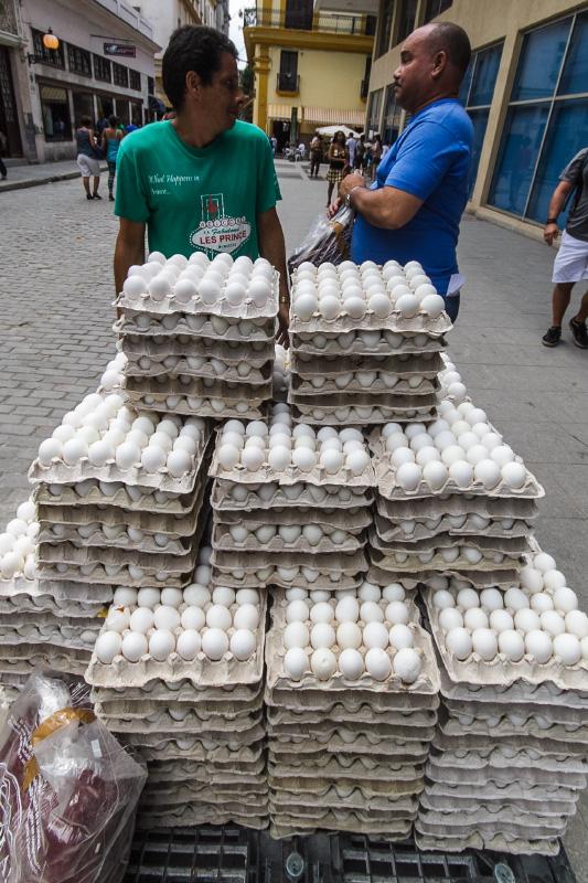 Egg delivery.  Photo: Juan Suárez