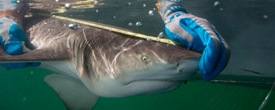 tiburon-measure-fusion-e1439237941780