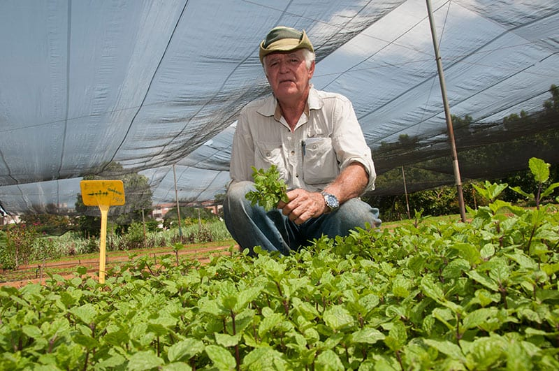"""Photo: Raquel Perez Diaz. Miguel Salcines got fed up with Ministry of Agriculture's """"theories"""" and set up a suburban cooperative on empty lots of land. It was born during the economic crisis and is today known as the """"Mint Cartel."""""""