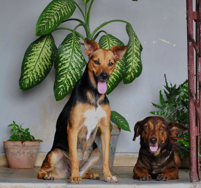 Dulcita with a friend.