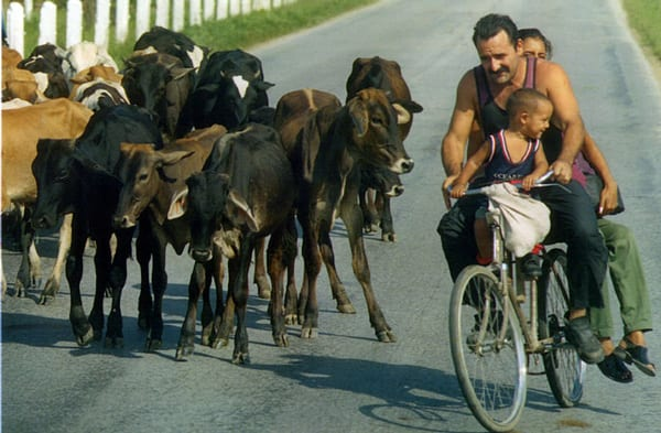 Cuban Agriculture Still Condemned to a Standstill | Havana Times