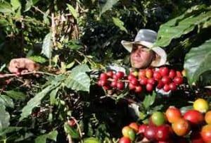 Coffee grower in eastern Cuban province.