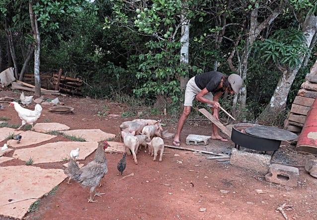 Dando de comer a los animales.
