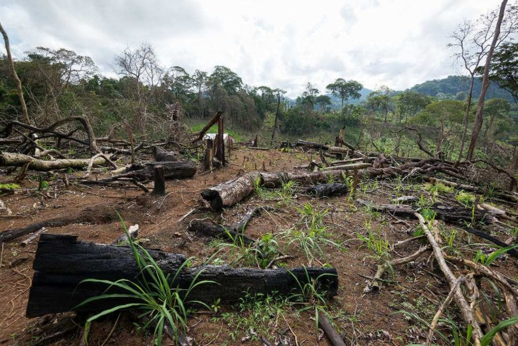 The forest has lost many trees. The invaders cut them down to grow forage for cattle. Carlos Herrera/Confidencial