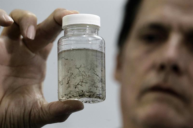 Dr. William Araya of the Costa Rican Ministry of Health displays a jar containing larva from the Aedes Aegypti mosquito, which transmits the Zika virus. EFE