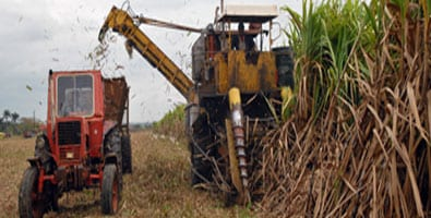 Sugar harvester. Foto: opiciones.cu