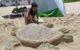 Escultura en arena - tortuga