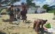 Escultura en arena - 500 aniversario de La Habana