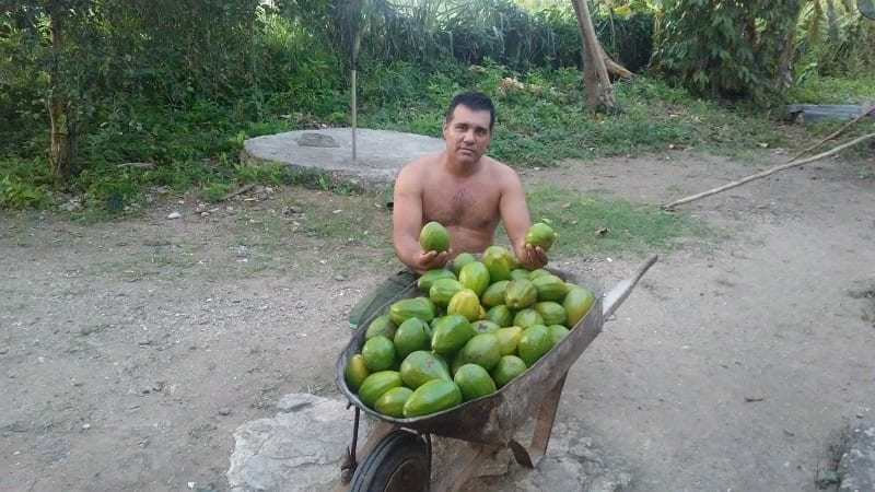 Farmer and Journalist, A Way of Life | Havana Times